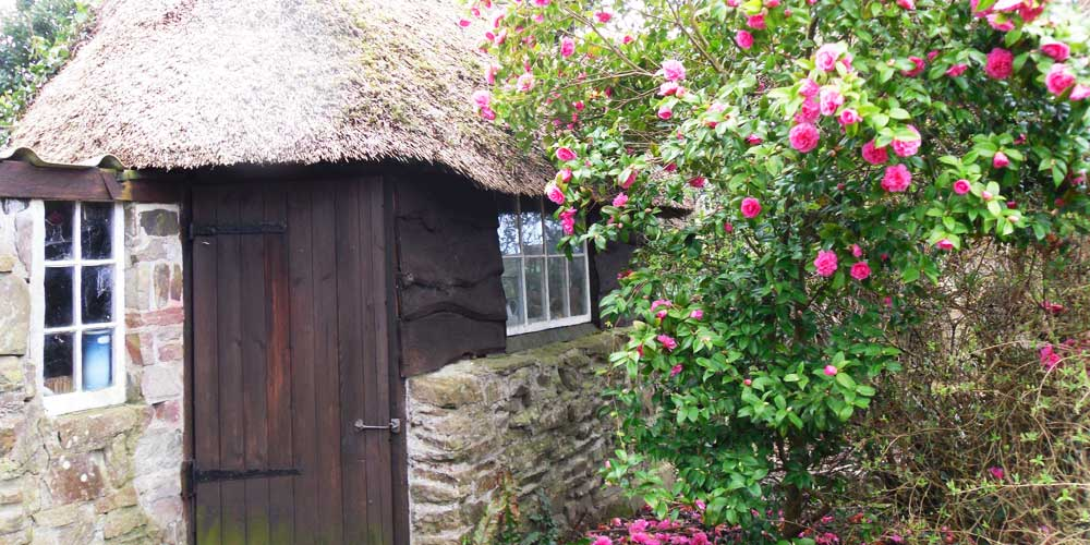 Country Garden at Croyde Cottage